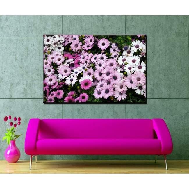 Canvas print Mauve and white daisies