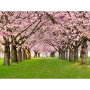 Wallpaper Spring time