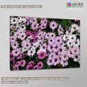 Canvas print Mauve and white daisies, side
