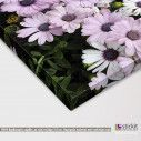 Canvas print Mauve and white daisies, detail