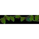 Φυτά της Ζούγκλας, μπορντούρα, Αυτοκόλλητα τοίχου