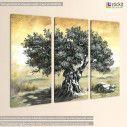 Canvas print Olive tree,  3 panels, side