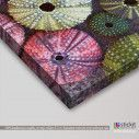 Canvas print Colorful sea urchins, side