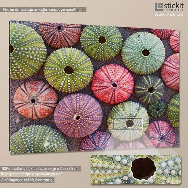 Canvas print Colorful sea urchins