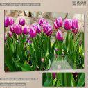 Πίνακας σε καμβά Ροζ τουλίπες, Pink tulips I