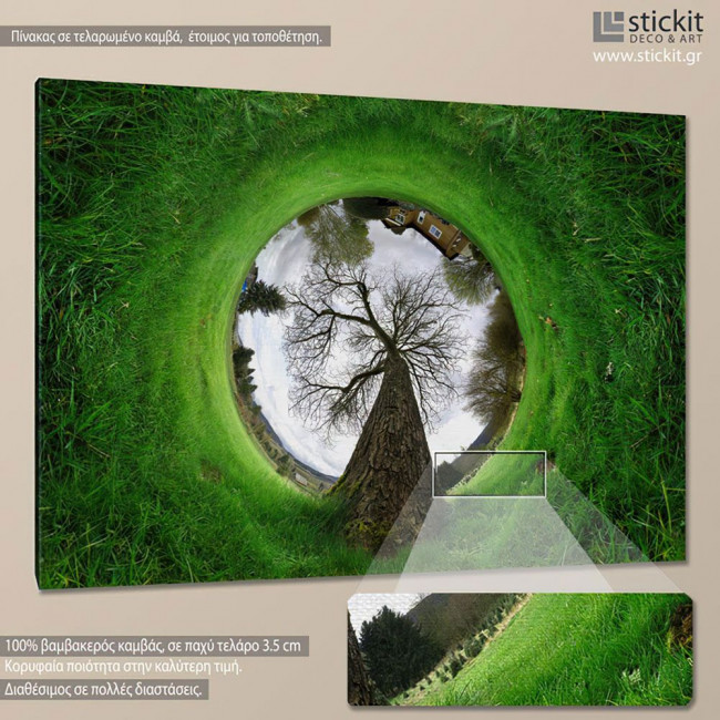 Canvas print Tree, Grass tunnel tree