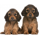 Kids wall stickers Cute puppies