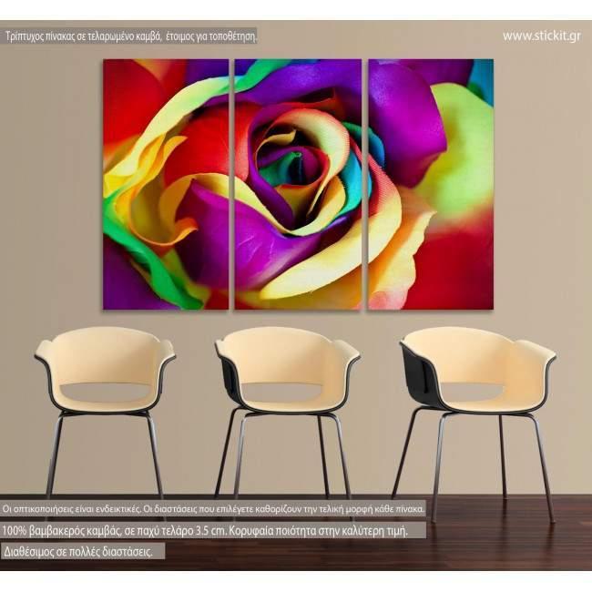 Πίνακας σε καμβά Τριαντάφυλλο, Multicolor rose, τρίπτυχος