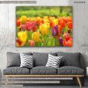 Πίνακας σε καμβά Τουλίπες, Tulips