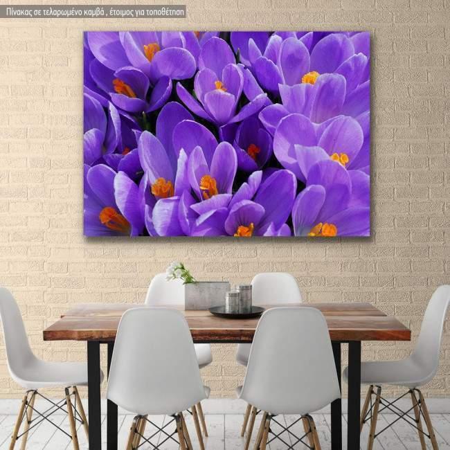 Πίνακας σε καμβά Κρόκος, Purple crocus