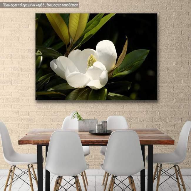 Πίνακας σε καμβά Μανόλια, Southern magnolia