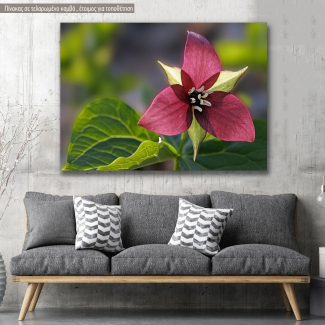 Canvas print, Red trillium flower