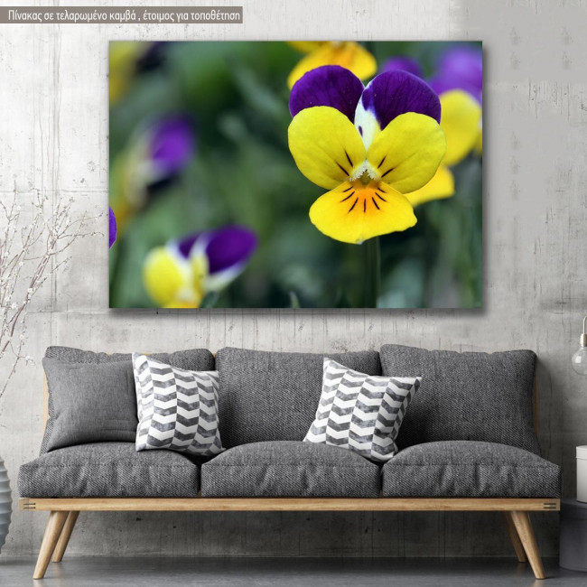 Canvas print, Yellow and purple pansies