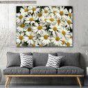 Canvas print, Garden full of white daisies
