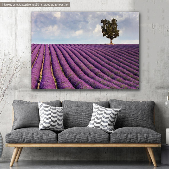 Canvas print, Lavender field and a lone tree