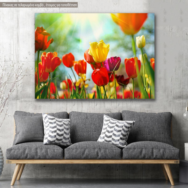Canvas print, Tulip sunshine