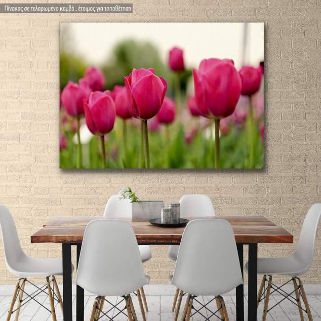 Canvas print, Tulip field