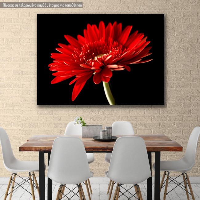 Canvas print, Red daisy
