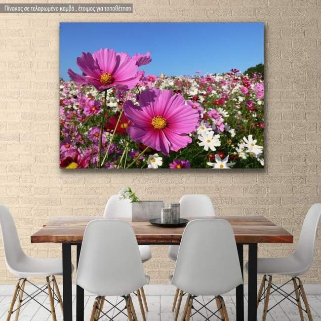 Canvas print, Pink cosmos