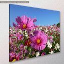 Canvas print, Pink cosmos, side
