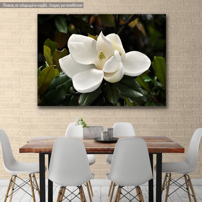 Canvas print, Magnolia