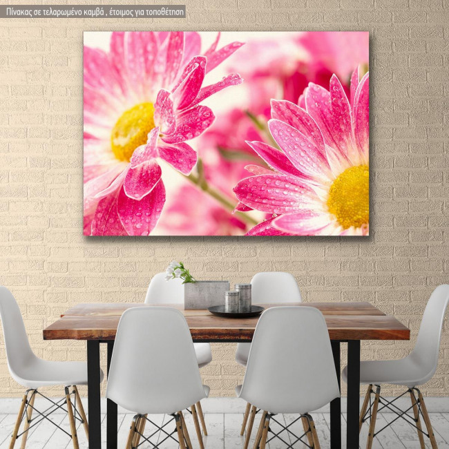 Canvas print, Two pink daisy - gerbera