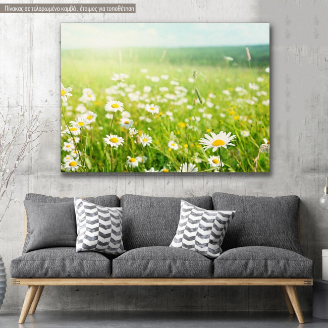 Canvas print, Field of daisy flowers