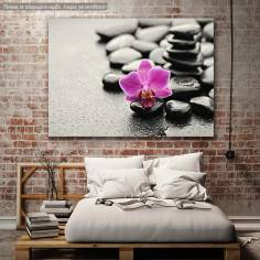 Canvas print, Orchid stones