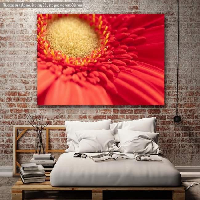 Πίνακας σε καμβά Μαργαρίτα, Heart of red gerbera