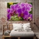 Canvas print, Orchid