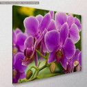 Canvas print, Orchid, side