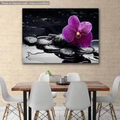 Πίνακας σε καμβά Ορχιδέα, Orchid with water drops