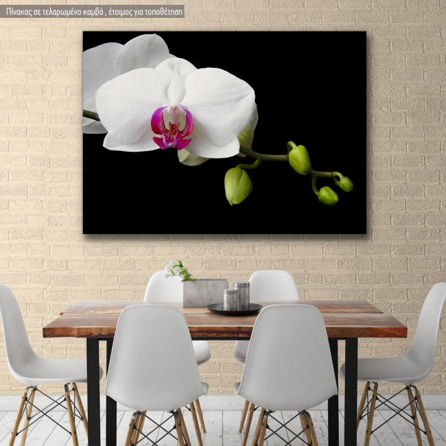 Canvas print Orchid sprout