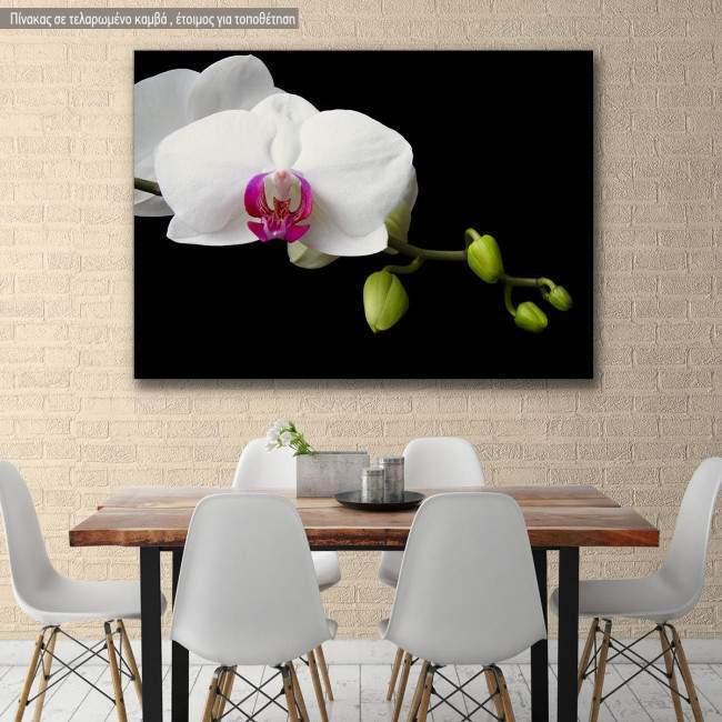 Πίνακας σε καμβά Ορχιδέα, Orchid sprout