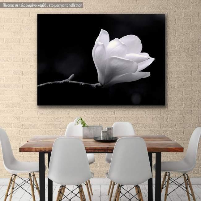 Πίνακας σε καμβά Μανόλια, Black and white magnolia