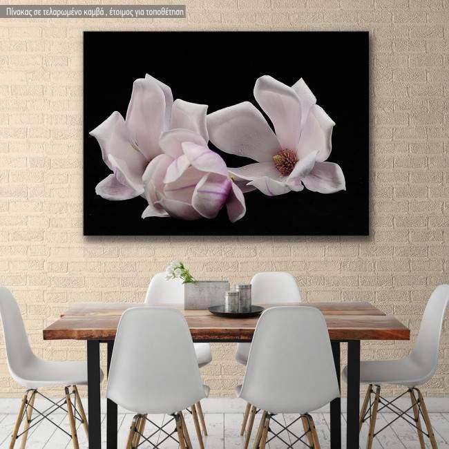 Canvas print Magnolia heap