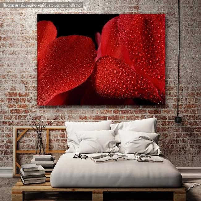 Canvas print Wet cyclamen flower