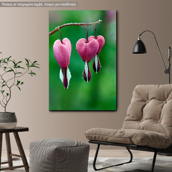 Canvas print Pink bleeding heart