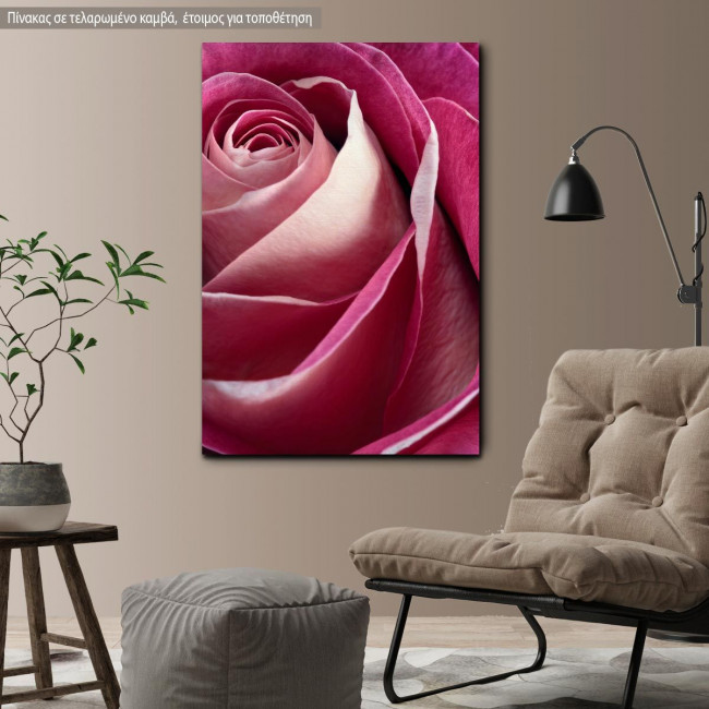 Canvas print Rose, Single pink rose