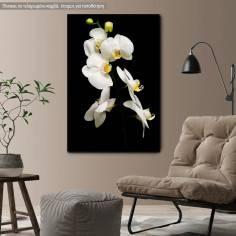 Πίνακας σε καμβά Ορχιδέες, Orchidaceae Phalaenopsis