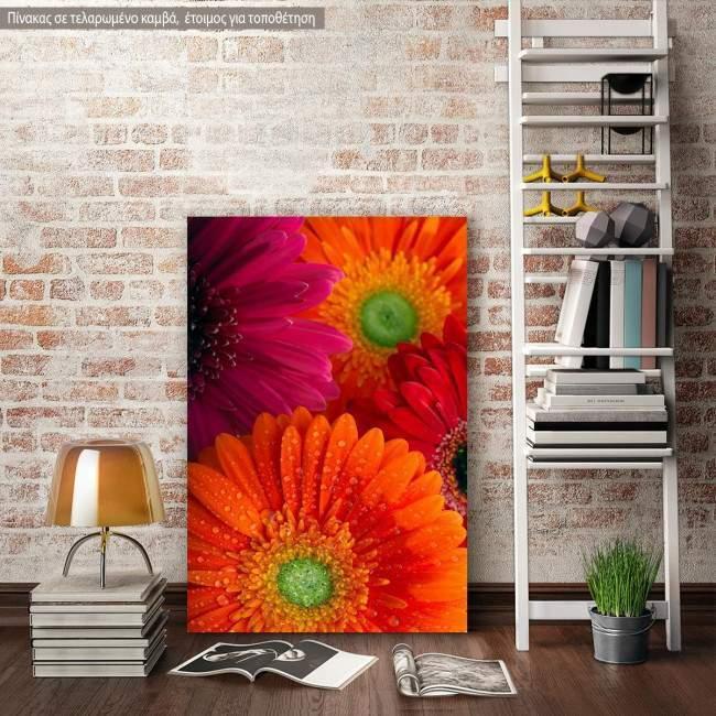 Canvas print Daisy-gerbera background