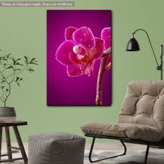 Canvas print Mini orchid on pink background