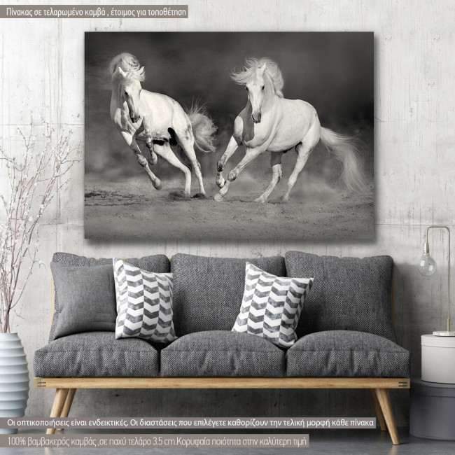 Canvas print white horses grayscale