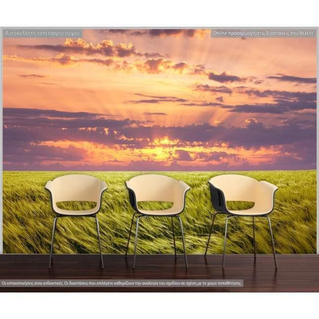 Ταπετσαρία τοίχου Πράσινο λιβάδι