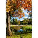 Tree pool, ταπετσαρία τοίχου φωτογραφική