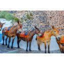 Donkeys in Santorini, φωτογραφική ταπετσαρία