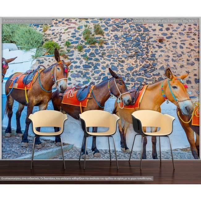 Ταπετσαρία τοίχου Donkeys in Santorini