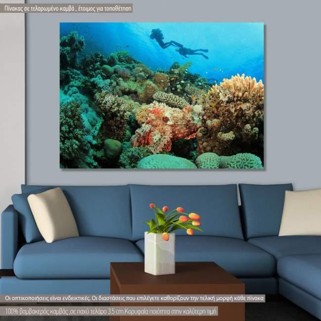 Πίνακας σε καμβά Coral reef, scorpionfish and scuba divers