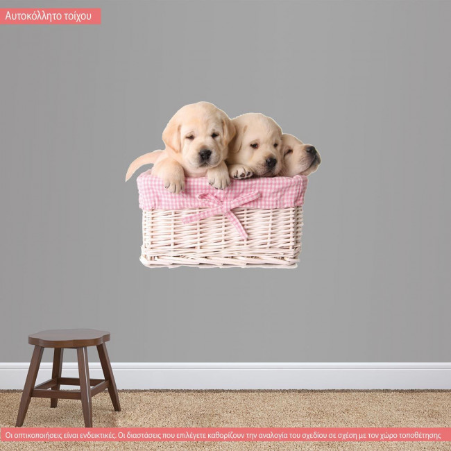 Kids wall stickers Gorgeous puppies