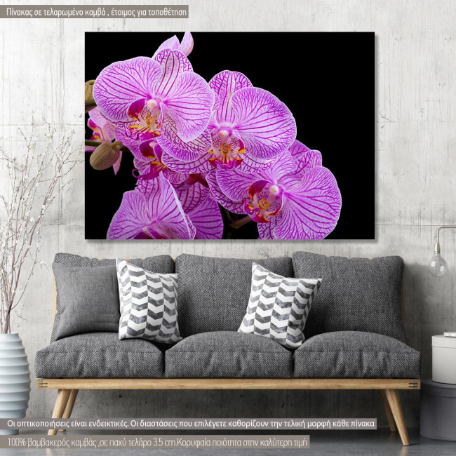 Canvas print, Orchids